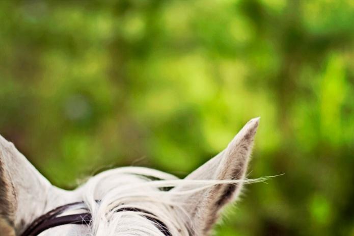 """in riding a horse we borrow freedom"" ~ Helen Thompson"