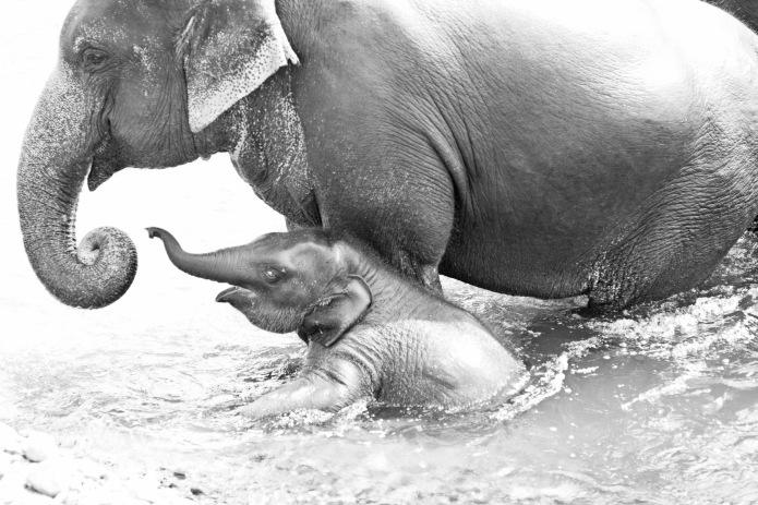 momma &ele
